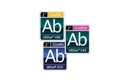 Secondary Antibodies & Conjugates