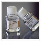 Mycoplasma Detection