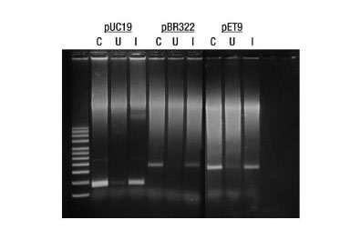 Cloning Reagents & Kits