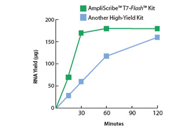 In Vitro Transcription & RNA