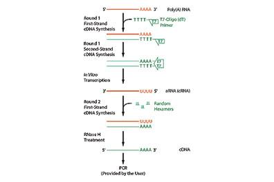 RNA Amplification & Gene Expression