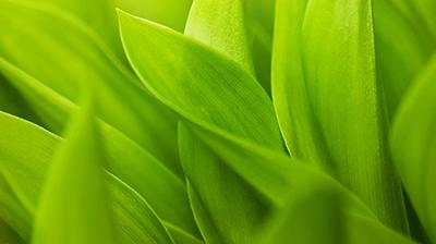 Plant Tissue Culture Media