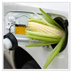 Renewable Biofuels