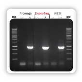 BioSearch EconoTaq® DNA Polymerase (with Mg++) 1,000 U -20º C