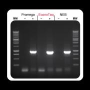 EconoTaq® DNA Polymerase (separate Mg++) 1,000 U -20º C